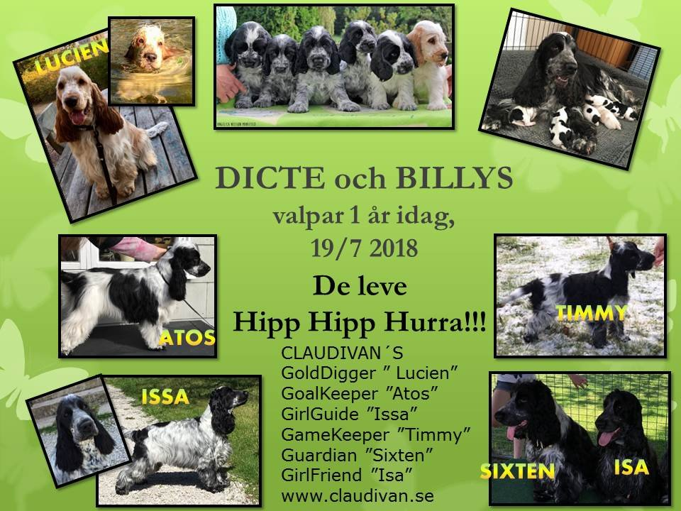 Dicte - Billy kullen 1 år
