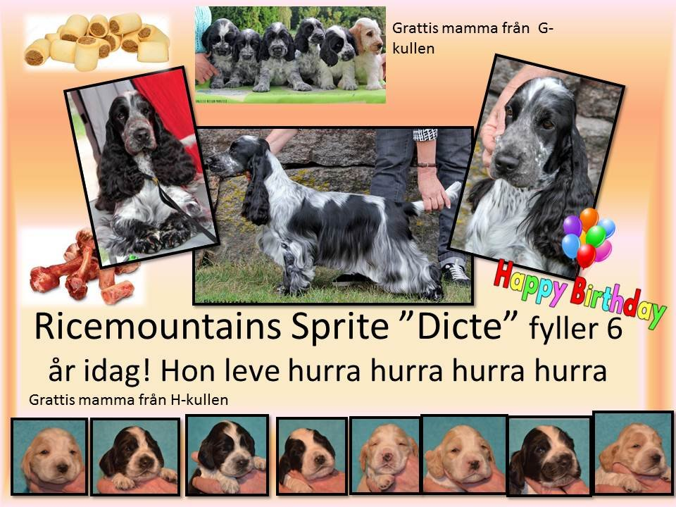 "Ricemountains Sprite ""Dicte"" 6 år, (2013-03-19)"