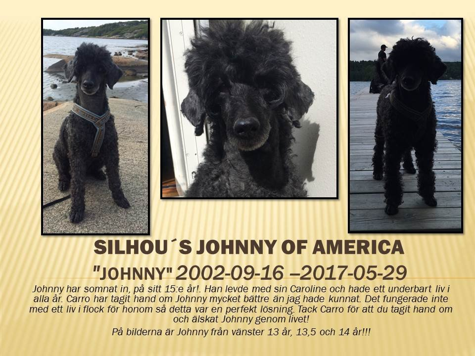 Silhou´s Johnny Of America