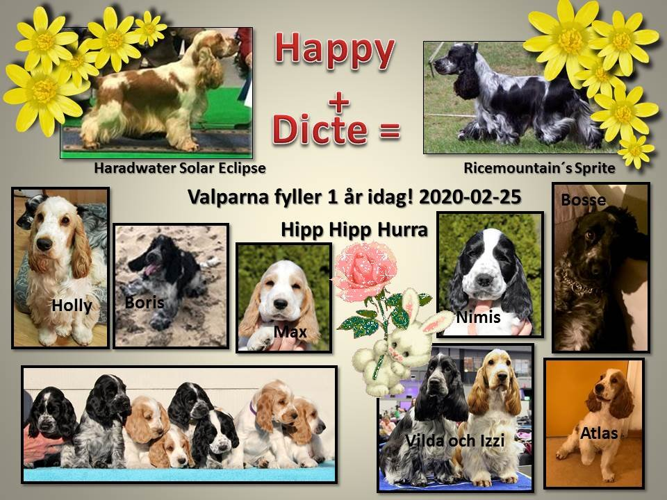 Valpar Dicte-Happy 1 år, 2020-02-25
